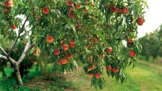کود دهی به درخت
