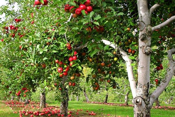خرید کود با کیفیت درخت