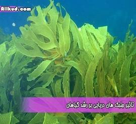 جلبک-شاخص