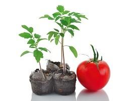 خرید کود گوجه فرنگی