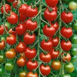 کود افزایش گلدهی گوجه فرنگی