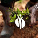 رابطه خاک و آب برای تغذیه گیاهان
